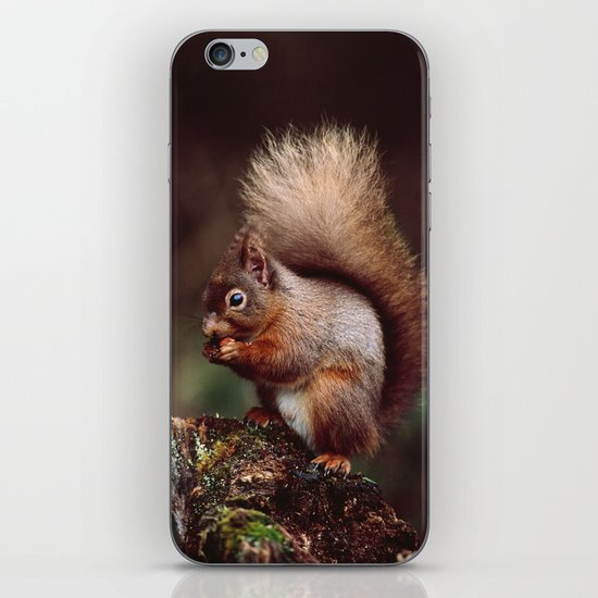 RED SQUIRREL. iPhone & iPod Skin