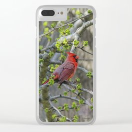 His Majesty the Cardinal Clear iPhone Case