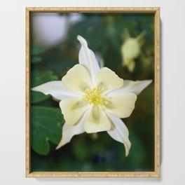 Yellow Columbine Flower Macro Serving Tray