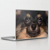 pomeranian Laptop & iPad Skins featuring Pomeranian by Pancho the Macho