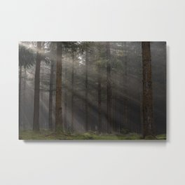 In the forest - Kessock, Highlands, Scotland Metal Print