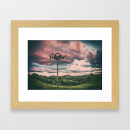 Araucaria in the Sky Framed Art Print