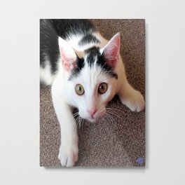 Catnipped! Metal Print