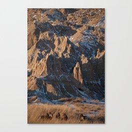 Deer - Badlands Canvas Print