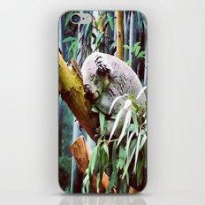 Kozy Koala  iPhone & iPod Skin