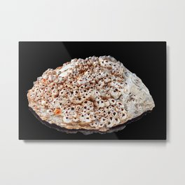 Pearl shell on bright black background Metal Print