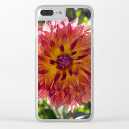 Dahlia / In The Garden / 1 Clear iPhone Case