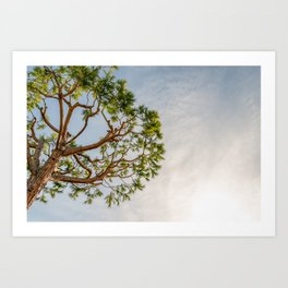 Maritime pine in French Riviera in a sunny winter day Art Print