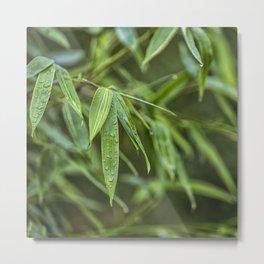 Lush Green Tropical Bamboo Leaf Metal Print