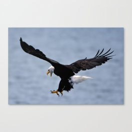 Bald Eagle Attack Canvas Print