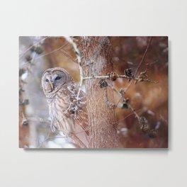 Owl :: In the Pines Metal Print