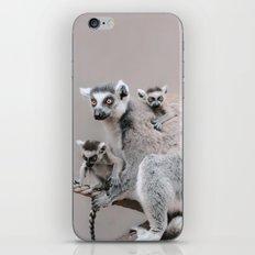 LEMURS by Monika Strigel iPhone & iPod Skin