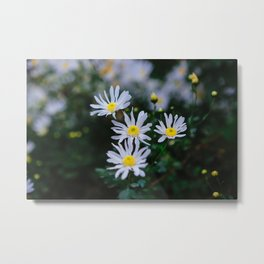 Daisy flower, Daisy hill, Asteraceae flower,  daisy hill, Photography, beautiful view, View Poster, Canavas Print Metal Print