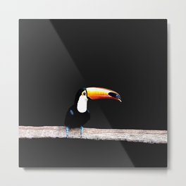 toucano black Metal Print
