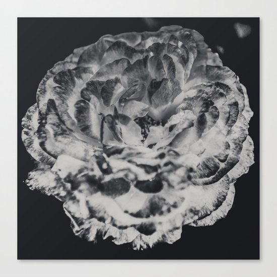 Desert Rose in Black and White Canvas Print