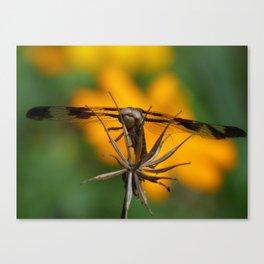 garden dragonfly 2017 Canvas Print