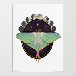 Indian moon Moth Poster