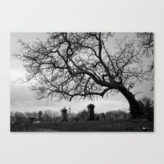 Dead Timber Canvas Print