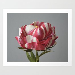 Candy-striped Paper peony Art Print