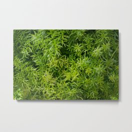 Green Life Metal Print