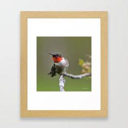 Hummingbird XII Framed Art Print