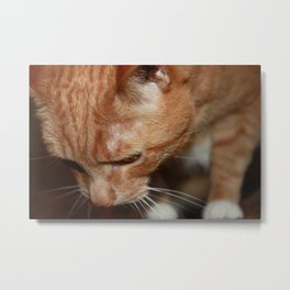 Tigger from Above Metal Print
