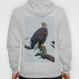 Bemidji Eagle I Hoody