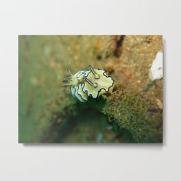 Sea Slug 2 Metal Print