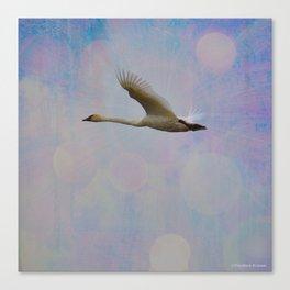 Radiant Swan! Canvas Print