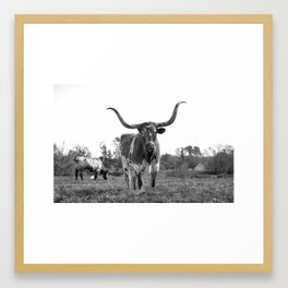 City Cattle Framed Art Print