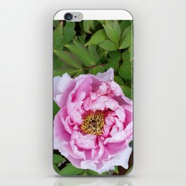 Blush pink iPhone Skin
