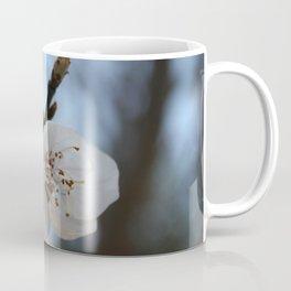 Close Up Apricot Blossom In Pastel Shades Coffee Mug