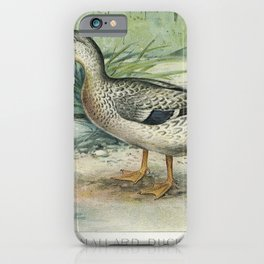 Mallard Duck (Anas Boschas) Female illustrated by JL Ridgway (1859-1947) and WB Gillette (1864-1937) iPhone Case