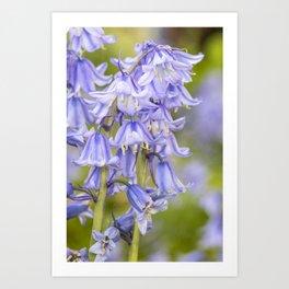 Bluebells May 2021 Art Print