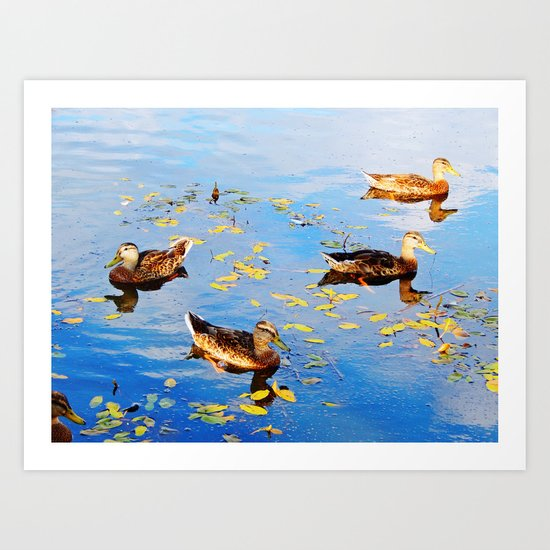 Ducks on a Pond Art Print