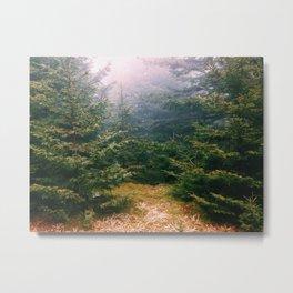 Grayson Highlands 002 Metal Print