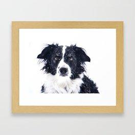 border collie in winter Framed Art Print