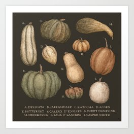 Pumpkins and Gourds Art Print