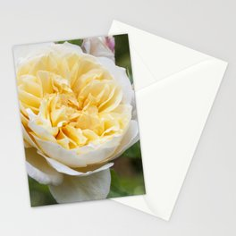Old English rose Stationery Cards