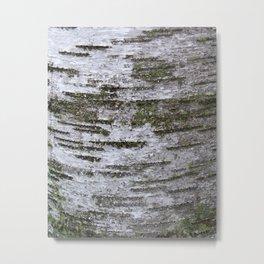 mossy birch Metal Print