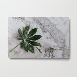 Aralia Leaf Metal Print