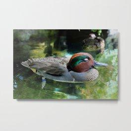 Lazy Duck Metal Print