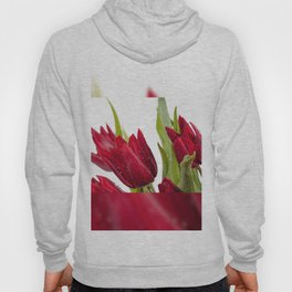 Red tulip heads sprinkled with water Hoody