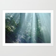 Misty Forest in Northern California Art Print