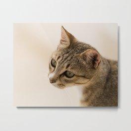 Cretan Cat Portrait Metal Print