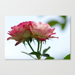 The Perfect Duet Canvas Print