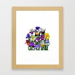 Iris garden Framed Art Print