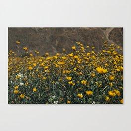 Super Bloom II Canvas Print