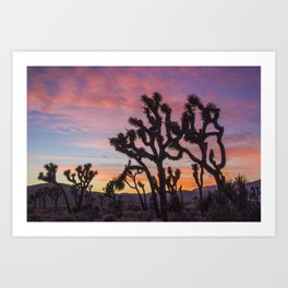 Colorful Sunset in Joshua Tree National Park Art Print