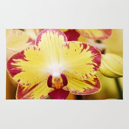 Close up Orchid #8 Rug